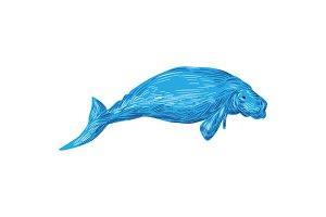 Dugong Marine Mammal Drawing