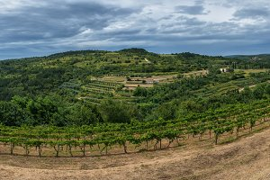 Vineyards in Croatia countryside