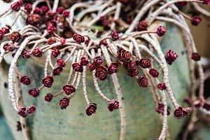 Sedum plant showing trailing stems
