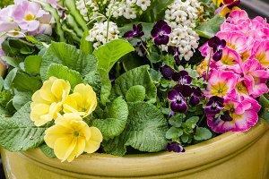 Live floral arrangement