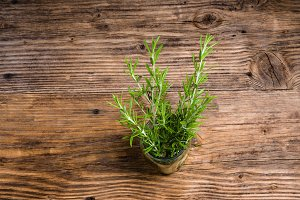 Freshly picked sprig of rosemary
