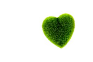 Green grass in heart shape - selective focus in white isolated background