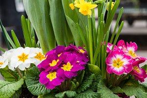 Live flower arrangement