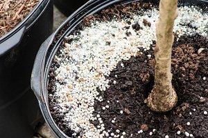 Commercial fertilizer applied