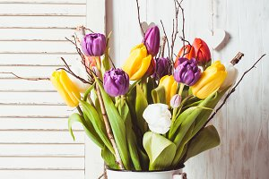 Color tulips in the cane