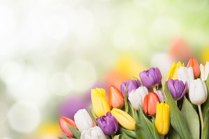 Colorful tulips over blur