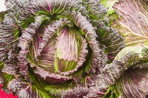 Red leaved cabbage at the market