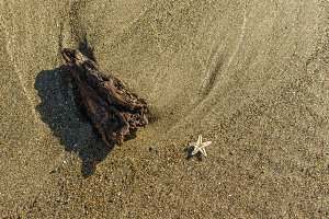 Small starfish on the beach