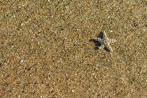 Small starfish on the beach