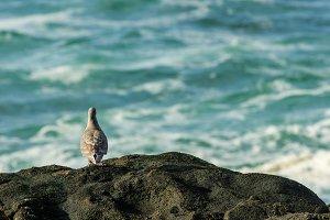 sea gull watching the ocean waves