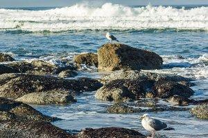 Tidal pool with sea gulls