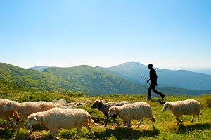 Herdsman in the mountains