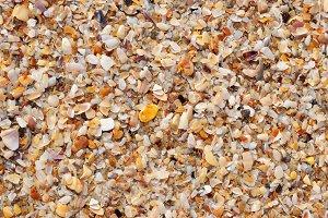 beautiful shells texture