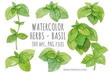 Watercolor Herbs, Basil Clip art