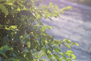 nature green Bush