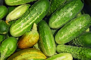 green cucumber vegetables