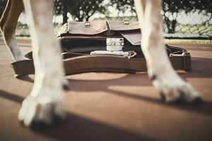 A dog's paws and a Camera bag