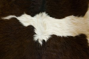 Brown and white cow skin texture