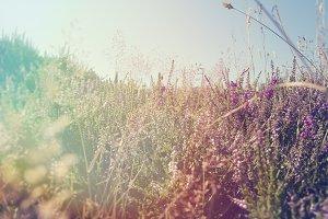 Hazy Summer Meadow