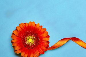 Art Design orange flower