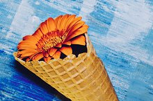 Flowers in waffle cone