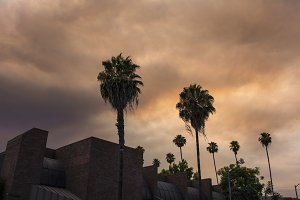 Palm Trees during Fire