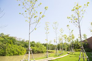 Parks, planting trees