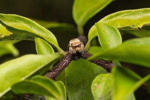 Macro small spider.
