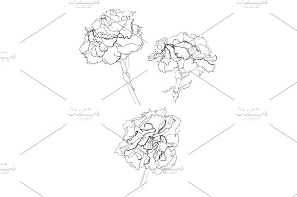 Carnation flower pencil drawing graphic objects creative market ccuart Gallery