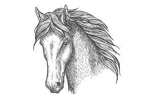 Purebred horse head sketch
