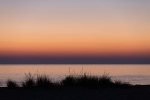 Beach grasses at sunset M