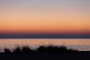 Beach grasses at sunset L