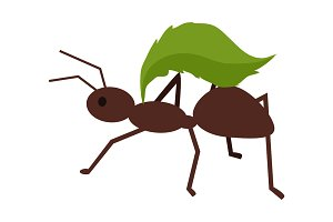 Brown Ant with Green Leaf