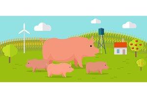 Pigs on Farmyard Concept