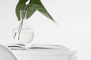 Minimal Photography | Leaves