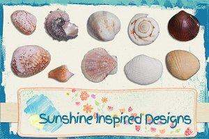 Sea Shells No.3