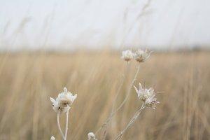 W flowers