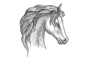 Arabian horse sketch