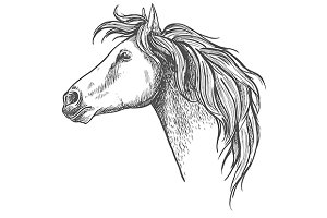 Racehorse head sketch