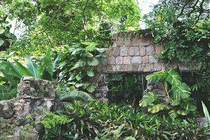 Tropical Island Ruins