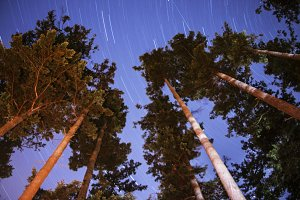 Star Trails Over the Trees