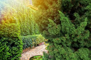 Beautiful green decorative garden and trees landscape