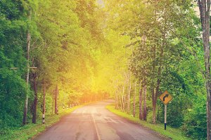 Country road with trees.