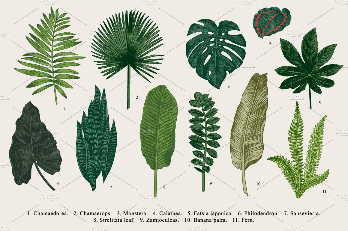 33 exotic leaves illustrations creative market