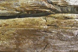 Rough Wood Texture VI