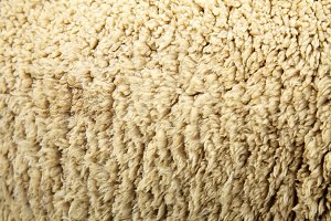 Sheep hair wool skin closeup background