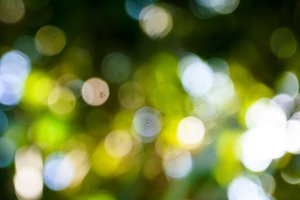 bokeh leaf of nature background
