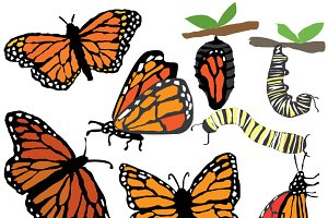 Quirky Monarch Butterflies Lifestage