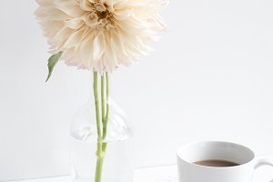 Dahlia and Coffee Styled Desktop