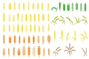 Wheat vector illustration.